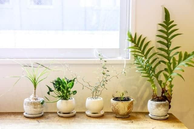 観葉植物ってどうやって処分するの?その方法とは